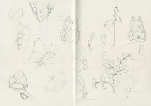 sketches-butterflies